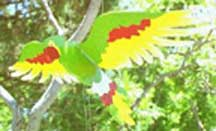 Handmade Wooden Flying Parrot Mobile